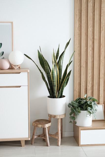 ambiance décoration intérieure en bois naturel